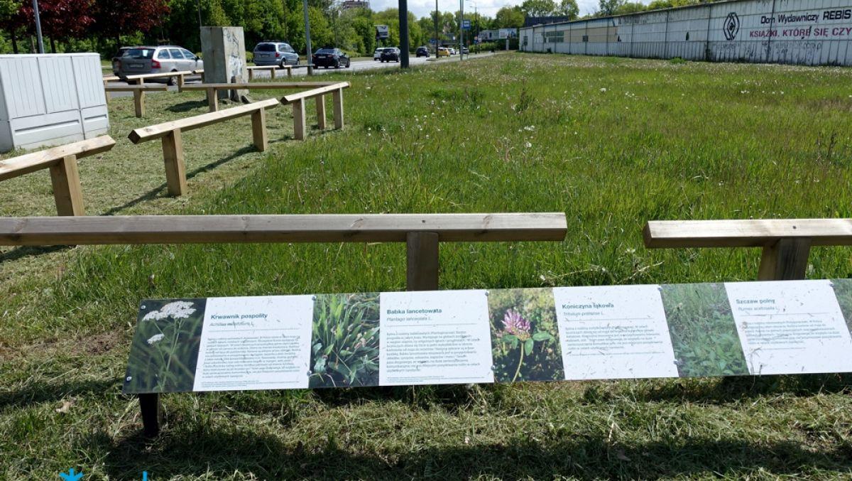Co rośnie na miejskich łąkach?