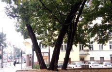 Skwer przy zbiegu ulic Kochanowskiego i Dąbrowskiego