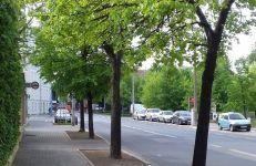 Powiększone misy drzew.