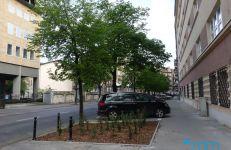 Nowe nasadzenia i powiększone misy drzew.