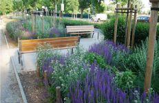 Podczas projektowania zieleni w pasach przyulicznych Zarząd Dróg Miejskich pamięta o miododajnych roślinach