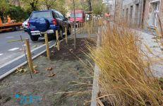 Wzdłuż ul. Karmelickiej posadzono już cztery platany. Wkrótce pojawią się tam także krzewy, byliny oraz trawy ozdobne