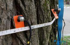 Badanie drzewa z użyciem tomografu