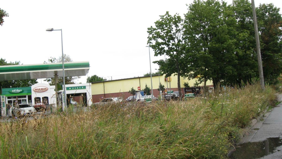 Porządkowanie zieleni w pasach drogowych