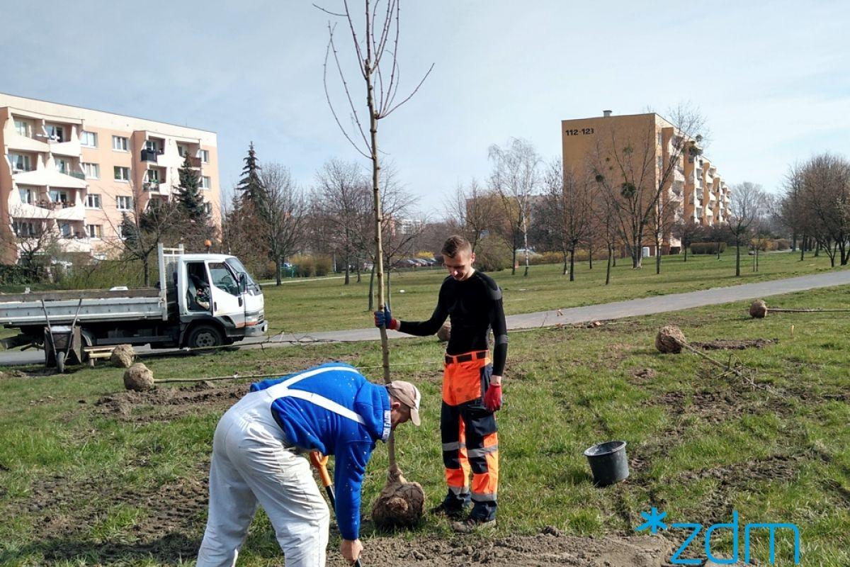 150 nowych drzew wzdłuż ul. Hetmańskiej