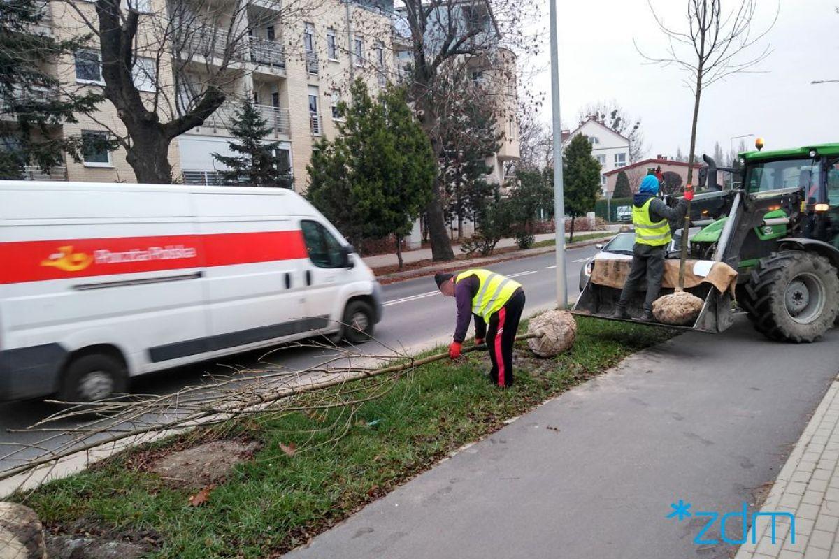 Drzewa wracają na ul. Milczańską