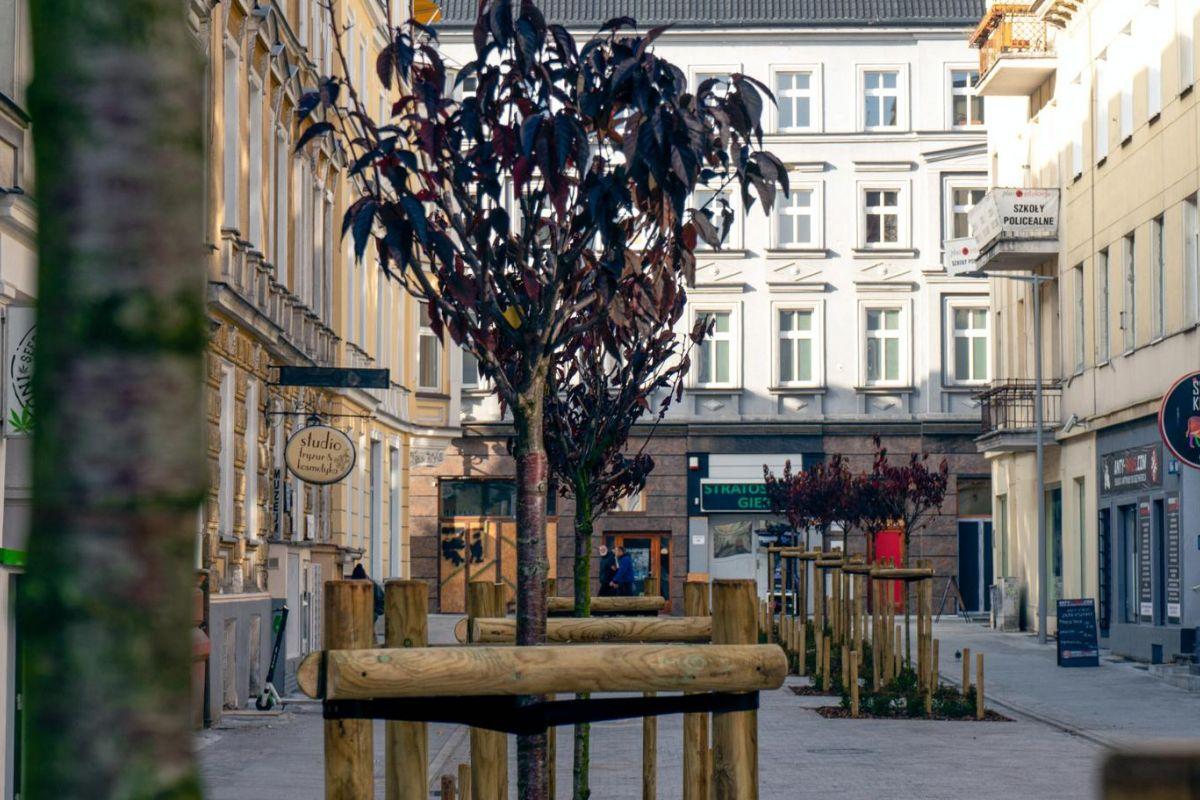 Nowe drzewa w centrum