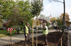 Sadzenie drzew na ul. Sablewskiego w 2016 r.