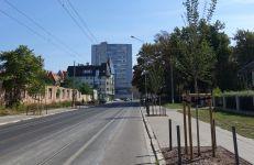 Drzewa na ul. Zwierzynieckiej posadzone w 2017 i 2018 r.
