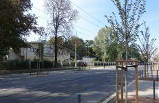 Drzewa na ul. Zwierzynieckiej osadzone w 2017 i 2018 r.