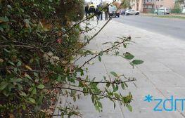 Wyremontowaliśmy kolejny odcinek chodnika na ulicy Jarochowskiego