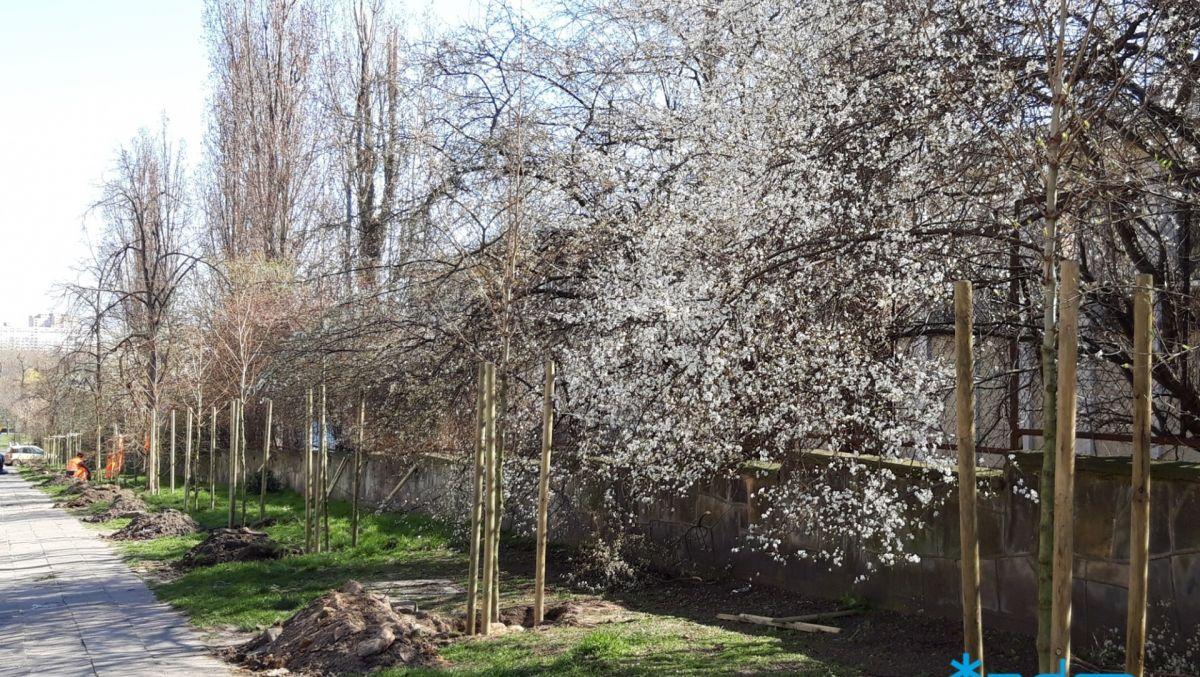 33 drzewa na Wildzie