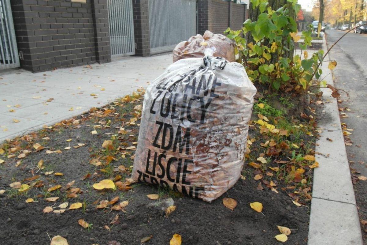Rusza akcja odbioru liści