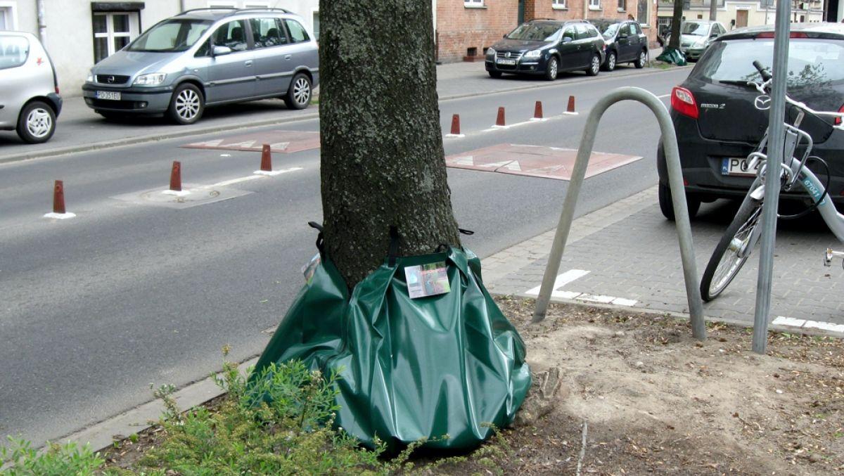Testujemy nowy sposób podlewania drzew