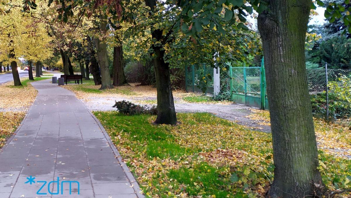Aleja spacerowa wzdłuż ul. Skibowej