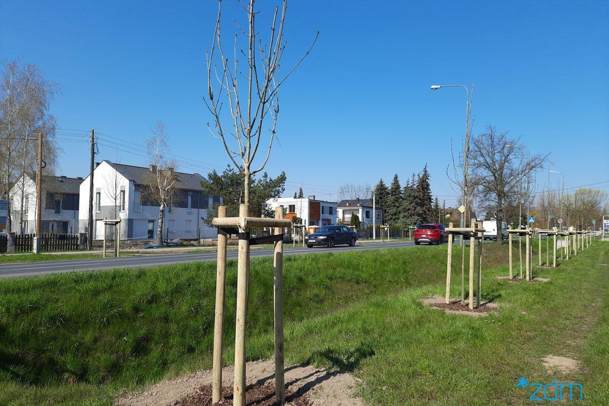 Nowe drzewa wzdłuż ul. Szczepankowo
