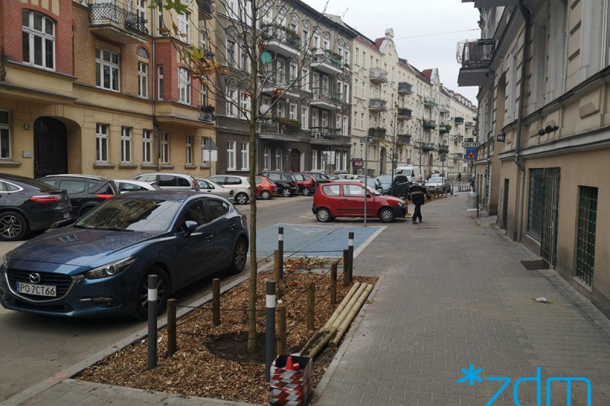 Drzewa wróciły na ulicę Małeckiego